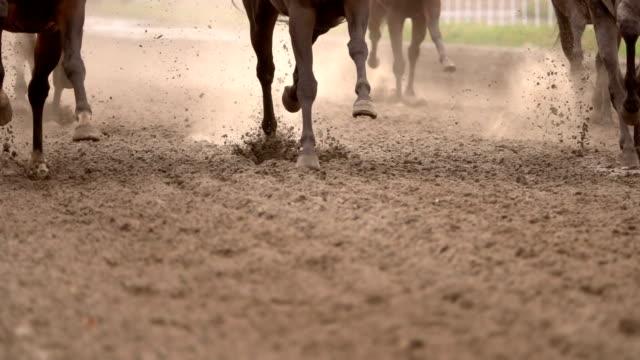 at sürüsü toz yükseltir. ağır çekim - horse racing stok videoları ve detay görüntü çekimi