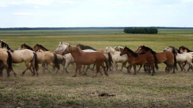 a herd of horses run across the field - cavalla video stock e b–roll