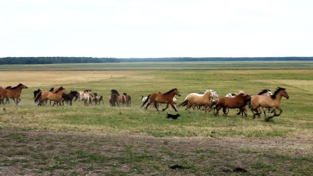 en besättning av hästar som springer runt i fältet betesmark - racehorse track bildbanksvideor och videomaterial från bakom kulisserna