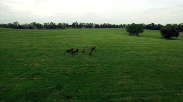 vídeos de stock, filmes e b-roll de antena: uma manada de cavalos à solta - américa do norte