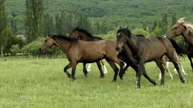 Herd Of Horses Running On The Field video