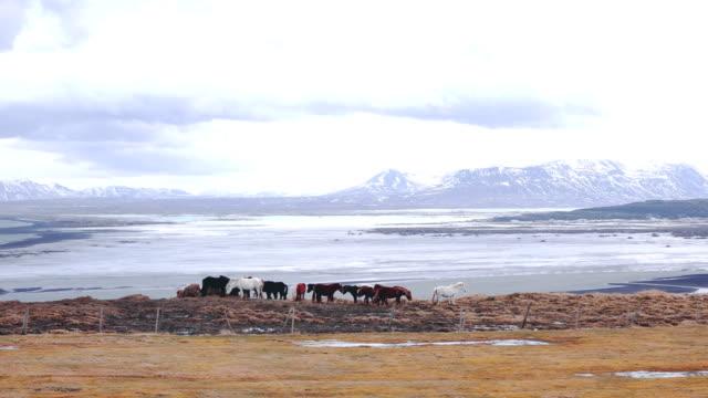 Herd of horses video