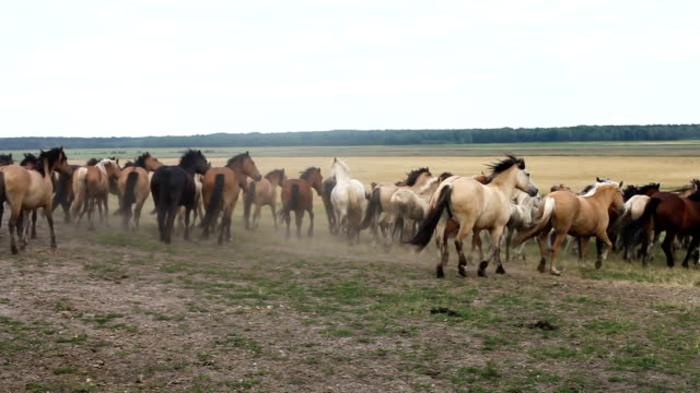 A herd of horses walk around the field A herd of horses walk around the field. corral stock videos & royalty-free footage