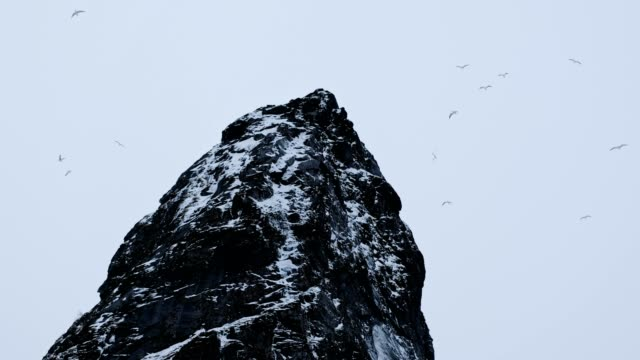 Herd of Seagull flying on mount with snow in gloomy