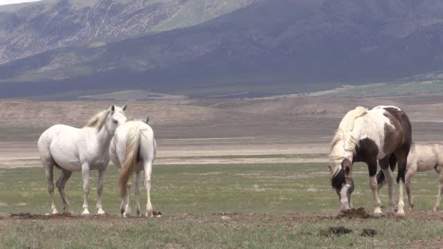 Herd of Wild Horses in the Utah Desert a herd of beautiful wild horses in the Utah desert mustang wild horse stock videos & royalty-free footage