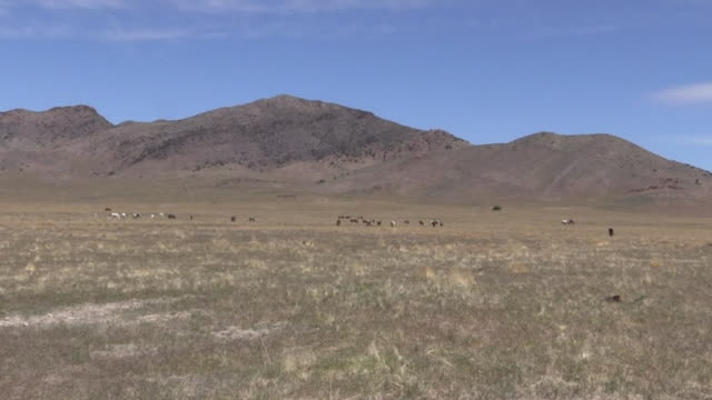 Herd of Wild Horses in Utah video