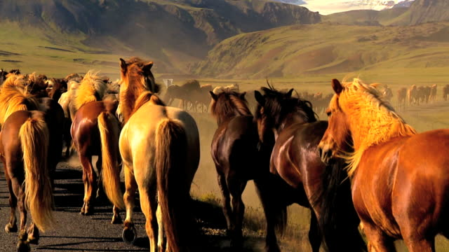 mandria di cavalli selvaggi - mustang video stock e b–roll
