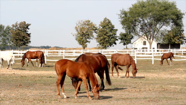 herd oh horses in corral herd of horses in corral corral stock videos & royalty-free footage