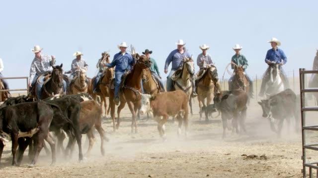 Herding Cattle video