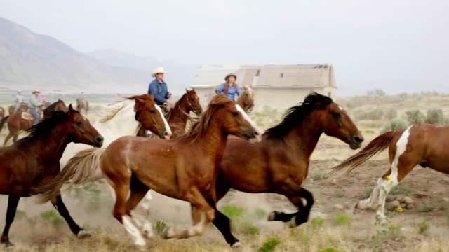 Herding Horses Cowboys and cowgirls herding horses in the wester plains. Utah, USA wild west stock videos & royalty-free footage