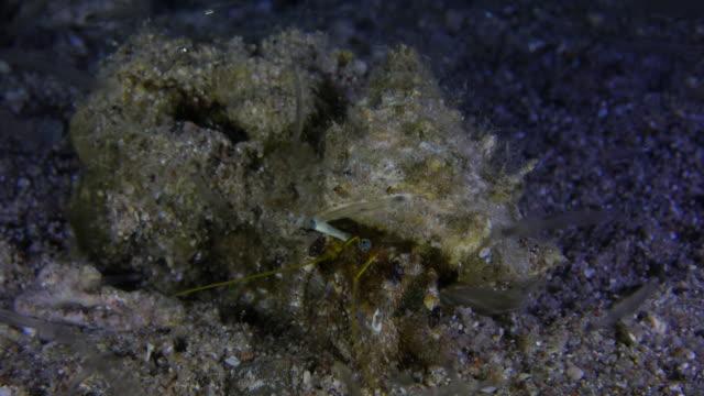 Hermit Crab At Night video