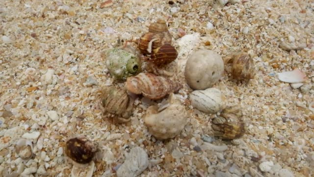 Hermit crab on the beach running away. Top view. Hermit crab on the beach running away. Top view. Concept of hiding from problems hiding stock videos & royalty-free footage