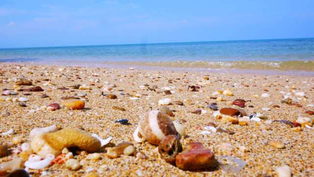 Hermit crab on the beach. Stock video Hermit crab on the beach. Stock video animal shell stock videos & royalty-free footage