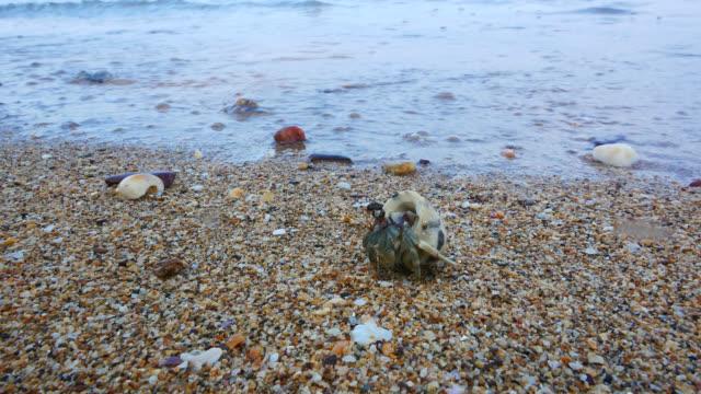 hermit crab on the beach - granchio video stock e b–roll