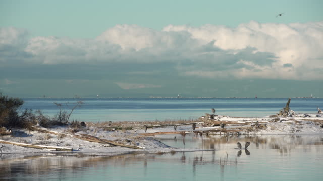 Herons in Snow Garry Point Richmond 4K UHD