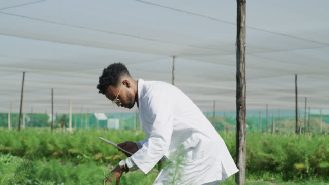 vídeos de stock e filmes b-roll de he's keen on discovering something new about these plants - estufa estrutura feita pelo homem