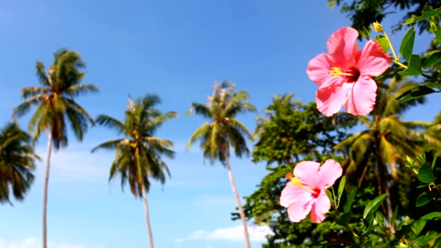 hibiscus flowers in front of beach