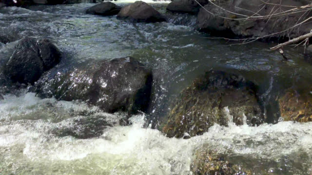 High Altitude Mountain Stream Flowing Water on Grand Mesa in Western Colorado 4k Video