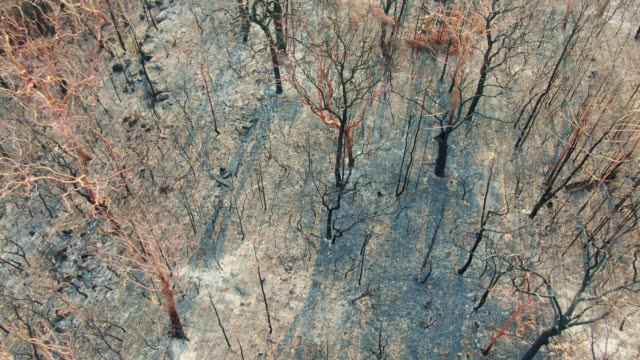High angle aerial bird's eye drone footage of a forest near Sydney, New South Wales, Australia, heavily burnt by the devastating bushfire season during 2019. Transition to green and unburnt forest.