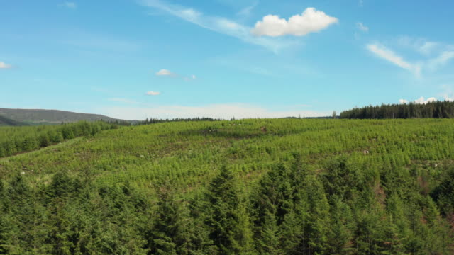 High angle drone view of an area of forest and blue sky in rural south west Scotland video