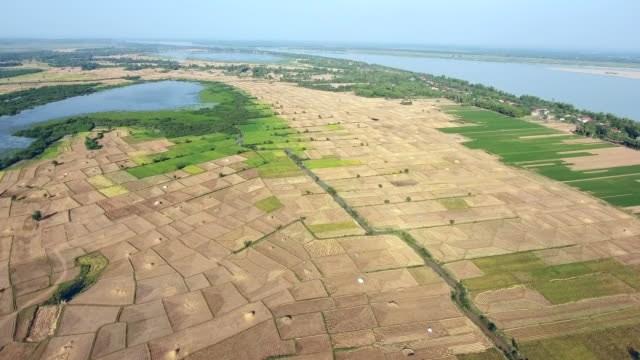 high angle panoramic drone flight of agricultural rice fields and the mekong river as backdrop - attività agricola video stock e b–roll