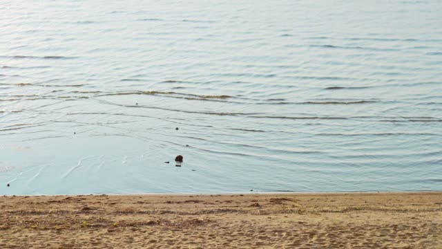 stockvideo's en b-roll-footage met hoge hoek zijaanzicht van vier diverse vrienden wandelen op het strand langs de kustlijn op de zomer dag. groep van vrolijke jonge mensen praten, bier drinken en dansen gevoel zorgeloos - vier personen