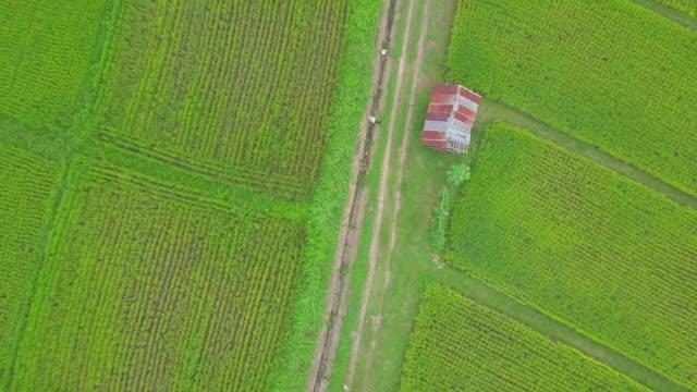 hög vinkel view aerial skott risfält i lampang thailand - städsegrön växt bildbanksvideor och videomaterial från bakom kulisserna