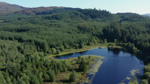 High angle view of a small Scottish loch in an area of forest in Dumfries and Galloway, south west Scotland The view from a drone of a small Scottish loch in a remote rural area of Dumfries and Galloway, south west Scotland. The footage was captured in the morning of a summer day. galloway scotland stock videos & royalty-free footage