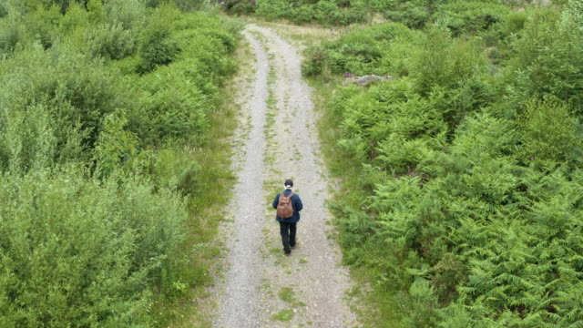 High angle view of an active senior man walking along a dirt road in an area of Scottish forest video