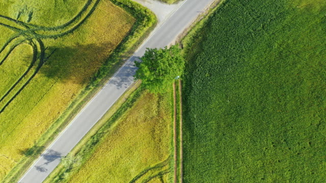 high angle view of canola fields and green fields - canola video stock e b–roll