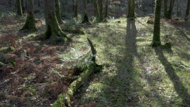 High angle view of deciduous woodland with the ground covered in wilted bracken and leaves video