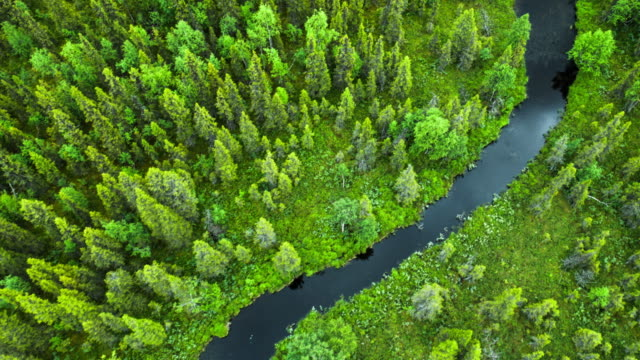 high angle view of river in forest -lapland, sweden - conifera video stock e b–roll