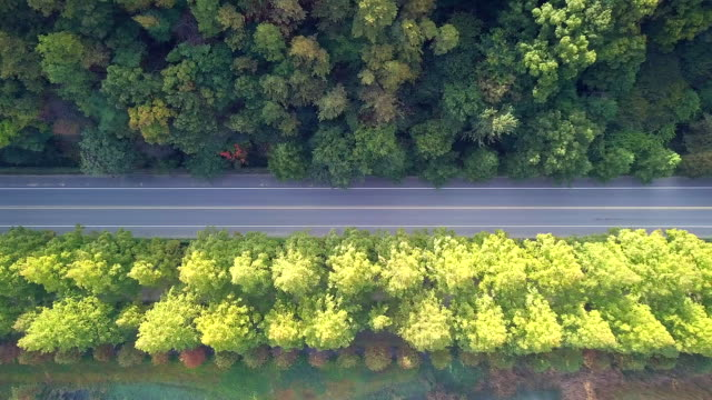 High angle view the road in autumn South Korea video