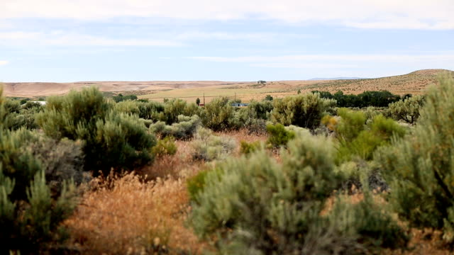 High desert sagebrush video