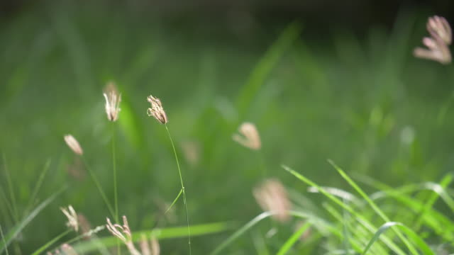 högt gräs på en sommardag. - summer sweden bildbanksvideor och videomaterial från bakom kulisserna