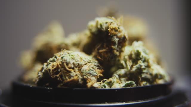 hög kvalitet marijuana roterande makro - hasch bildbanksvideor och videomaterial från bakom kulisserna