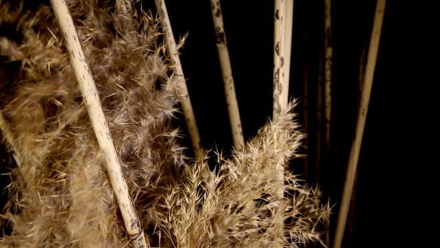 """hoch """" reeds"""" . - rohrblattinstrument stock-videos und b-roll-filmmaterial"""