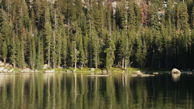 High Sierra Forest and Lake video