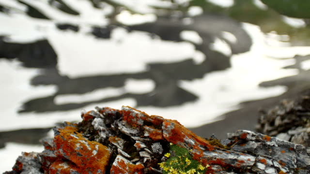 high snowy mountain rocks, flowers and moss video
