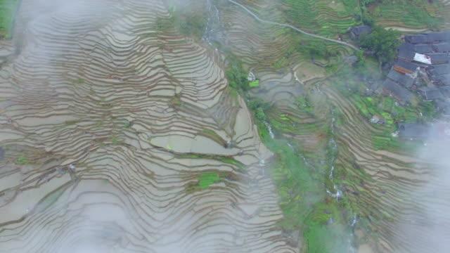 dużej wysokości widok z lotu ptaka ryżu niełuskanego, longsheng.guilin, chiny - longsheng filmów i materiałów b-roll