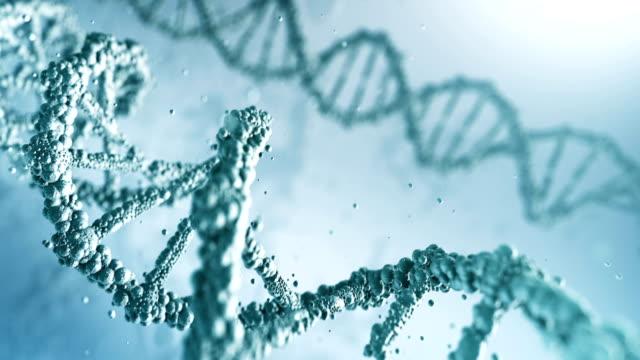 vídeos y material grabado en eventos de stock de adn altamente detallado (brillante) - lazo - cromosoma