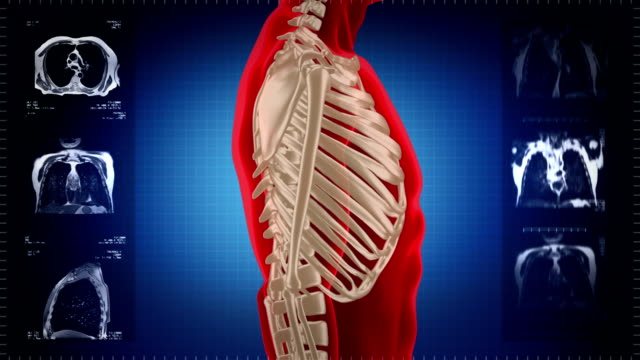 Highly detailed torso scan. Loopable. Red/white. Blue background. video