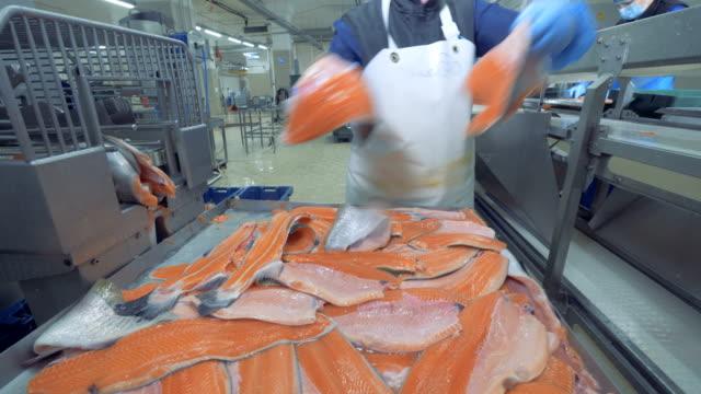 hög kvalitet öring filéer får sätta på transport ören. fisk fabrik. - livsmedelstillverkningsfabrik bildbanksvideor och videomaterial från bakom kulisserna