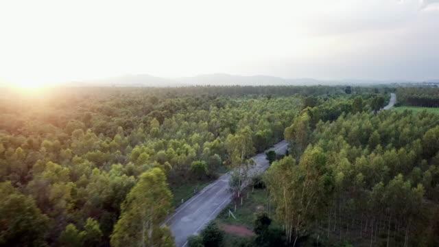 高速道路や森林 - 州間高速道路点の映像素材/bロール