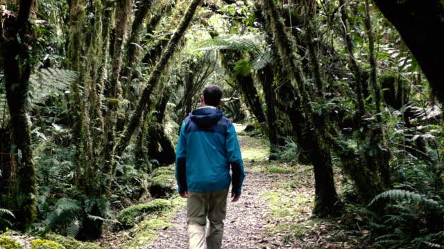 Hiker in lush New Zealand rainforest near Fox Glacier. Static shot. video