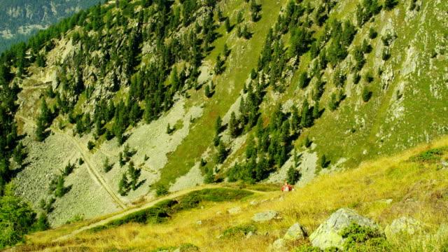 Hiker in Swiss Alps video