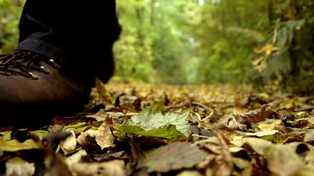 Hiker Walking Through Autumnal Leaves video