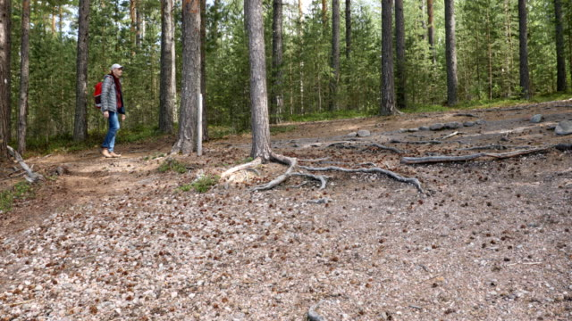 vídeos de stock e filmes b-roll de hiker with backpack on a footpath - man admires forest