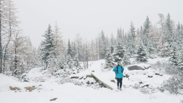 vidéos et rushes de femme de randonneur randonnée sur neige fraîche d'hiver dans la forêt de pins - randonnée équestre