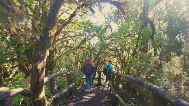 WS TS Hikers walkin Laurel forest in the Garajonay National Park / Canary Islands, Spain